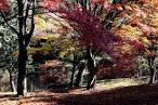 「福島県立自然公園」の画像検索結果