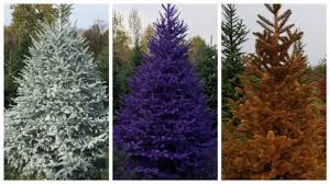 trend of real painted trees comes to upstate ny