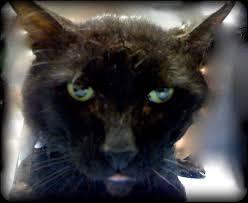how to catch an uncatchable cat virtuavet