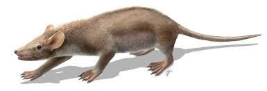 mammiferi volanti peli e aculei comparsi 125 milioni di anni fa con i primi