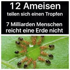 ameisen auf dem balkon 100 ameisen im badezimmer fliegende ameisen u2013 was tun