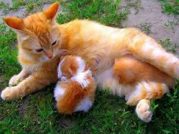 beautiful kittens beautiful colors on mom and bright kittens cutest paw