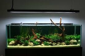 Aquascape Freshwater Aquarium Aquascape U2013 Basic Principles And Elements Of Landscaping Under Water