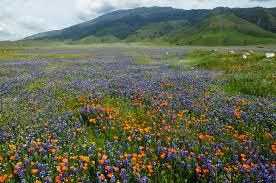 California Landscapes images California landscapes gardening landscaping jpg