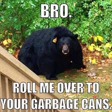 Bear Stuff Meme - obese black bear humor and meme