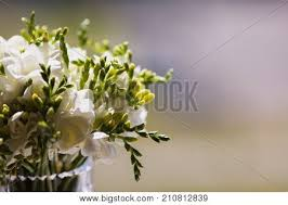White Wedding Bouquets Wedding Images Illustrations Vectors Wedding Stock Photos