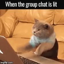 Meme Chat - group chat meme gifs tenor