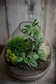 17 best shaniel terrarium project images on pinterest terrarium