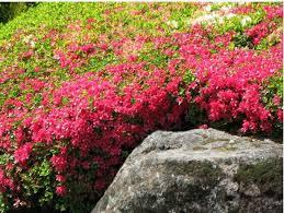 flowers for japanese garden