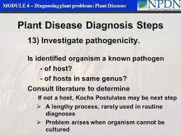Plant Disease Diagnosis - diagnosing plant problems plant diseases ppt video online download