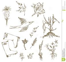 30 sketch of plants for your design stock vector image 21039357