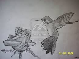 butterfly n hummingbird designs