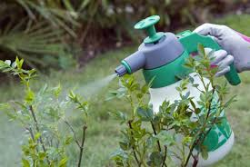 chemicals using them in gardens rhs gardening