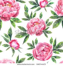 Peony Flowers by Beautiful Pink Peony Flowers On White Stock Vector 394975399