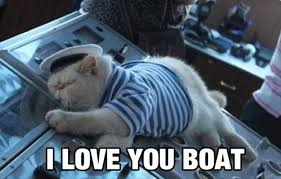 Cat Buy A Boat Meme - funny pictures of the day 96 pics