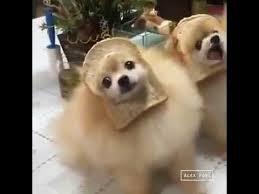 Meme Dog - ultimate bread dog meme youtube