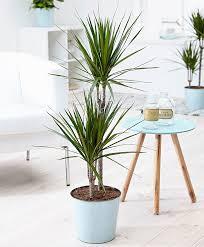 buy green house plants online bakker com
