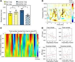 nasal respiration entrains human limbic oscillations and modulates