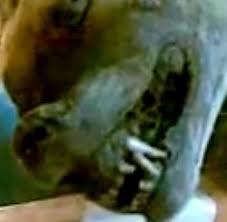 السلعوه حيوان شرس ظهر بمصرشرح وصور و الفيديو Images?q=tbn:ANd9GcSGJ8tncKaquGoIk8eT8BDmb5HKspyAHWq8ZMBe5gio9LYeIRSj