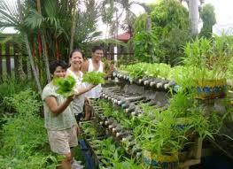backyard vegetable garden design ideas kerala the garden gogo papa