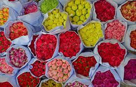 various colour of carnation flowers in bulk at flower market stock