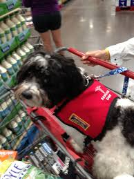 fake service dogs are becoming a problem king5 com