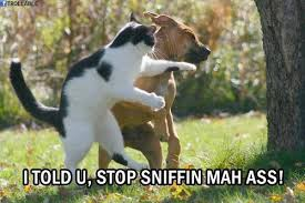 Cat Fight Meme - funny dog and cat fighting picture