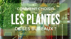 plante bureau quelles plantes sans entretien choisir pour vos bureaux