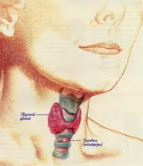 avoid this if you want to keep your thyroid healthy