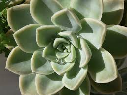 what is a succulent plant u2013 succulent vs cactus and other