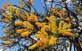 the voyages of ellida of laira australia u0027s best climate geraldton