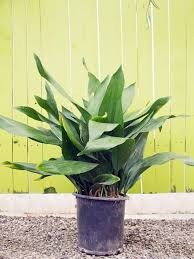 10 easy care houseplants for low light