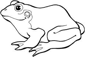 innovation design frog coloring pages free printable frog coloring
