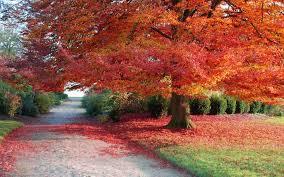 imagenes de otoño para fondo de escritorio descargar la imagen en teléfono paisaje árboles otoño gratis 26794