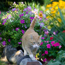 Keep Cats In Backyard Stopping Cats In The Garden
