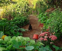 878 best gardening permaculture images on pinterest vegetable
