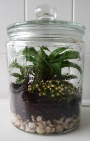 how to make a closed terrarium with a glass jar my jungle garden