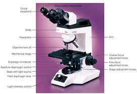 why is a light microscope called a compound microscope journey to optical light microscopy healthtard