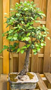 winterizing your potted deciduous trees south austin irrigation