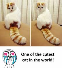 Cutest Memes - dopl3r com memes one of the cutest cat in the world