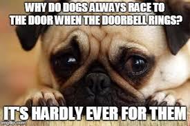 Sad Dog Meme - sad dog memes imgflip