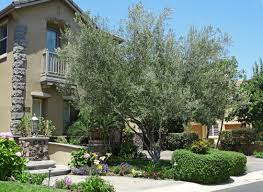 trees waterwise socal