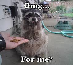 Raccoon Meme - funny raccoon picture omg for me meme