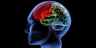 si e des motions dans le cerveau le mental l esprit votre cerveau neuro the swing golf of shawn