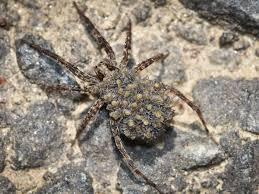 spiders pest control parkersburg marietta athens