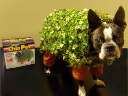 Halloween Costumes English Bulldogs 30 Awesome Dog Cat Halloween Costumes Dogtime