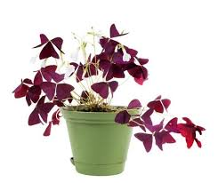 Easy Care Indoor Plants Add Some Color 5 Cheery Easy To Grow Indoor Flowering Plants