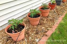 Soil Mix For Container Gardening - how to make potting soil for container gardening with recipe