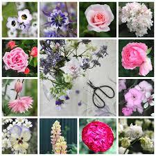 flowers in november camellia rose november flowers