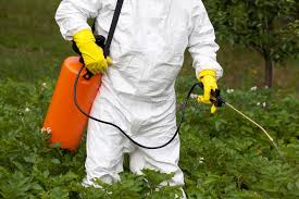 pesticide spraying non organic vegetables stock image image
